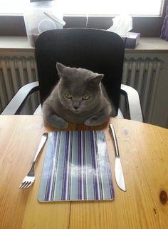 Quand on vous demande d'aller aider en cuisine. | 17 réactions de chats parfaites pour les fêtes