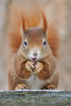 SEVERAL SQUIRRELS USED TO DIG OUT THE SOIL FROM RJ'S PLANT POTS SO THEY COULD BURY THEIR NUTS IN THEM! THIS ONE LOOKS INNOCENT, HARMLESS!:)