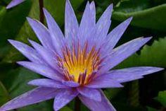 the most unique flowers