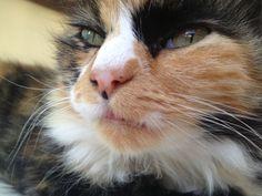 Clio ♥ Cats, Photography, Animals, Gatos, Photograph, Animales, Kitty Cats, Animaux, Photo Shoot