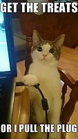 Get The Treats Or I Pull The Plug funny lol humor funny pictures funny memes funny pics funny images funny animal pictures funny animal memes really funny pictures funny pictures and images Funny Animal Quotes, Cute Funny Animals, Funny Sayings, Animal Funnies, Funniest Animals, Cute Animal Memes, Clean Animal Memes, Cute Cat Quotes, Kitten Quotes