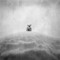 Black and White Imaginary World – Fubiz™
