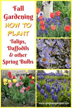 Planting Bulbs in the Fall for Amazing Spring Flowers How to Plant Tulips Daffodils & Other Spring Bulbs The post Planting Bulbs in the Fall for Amazing Spring Flowers appeared first on Ideas Flowers. Daffodils Planting, Tulips Garden, Garden Bulbs, Shade Garden, Flower Gardening, Planting Plants, Fruit Garden, Growing Plants, Daffodil Bulbs