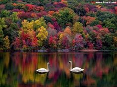 autumn senery photos | Fall's Colors - Photos of bright and pale autumn colors - Forests ...