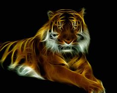 Glowing Tiger by mceric.deviantart.com on @deviantART