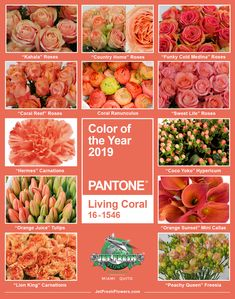 Pantone Color of the Year 2019 Living Coral Pantone Color of the Year 2019 Livin. Pantone Color of Unique Flowers, Different Flowers, Coral Wedding Flowers, Coral Wedding Centerpieces, Live Coral, Color Of The Year, Pantone Color, Coral Color, Color Trends