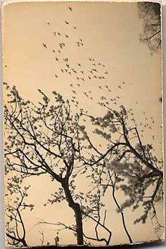 """Masao Yamamoto """"Le vent d'automne souffle d'abord sur les volubilis"""" Miura Chora"""
