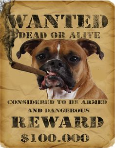 Wanted for too much licking.