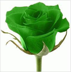 N.º 4: VERDE O Verde é a cor da Natureza, da força equilibrada e do progresso mental e físico. O Raio Cromático Verde é o raio da harmonia. As pessoas influenciadas por este raio tendem a ser tranquilas, do tipo que só perdem as estribeiras depois de serem muito provocadas, já que prezam, acima de tudo, a paz.Assim, se nasceste, por exemplo, no dia 29 (de qualquer mês), a tua cor é o Laranja, porque 2 + 9 = 11 e 1 + 1 = 2.
