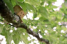 In the Tree | 相片擁有者 Bunnyrel