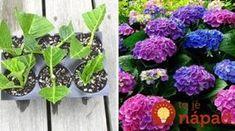 Ukážeme vám najjednoduchší a najrýchlejší spôsob, ako ju… String Garden, Garden Inspiration, Garden Plants, Gardening Tips, Beautiful Flowers, Garden Design, Diy And Crafts, Floral Wreath, Home And Garden