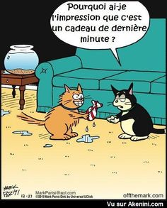 Images drôles animaux - Funny cartoons animals