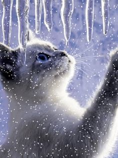 Cat in a snowstorm....