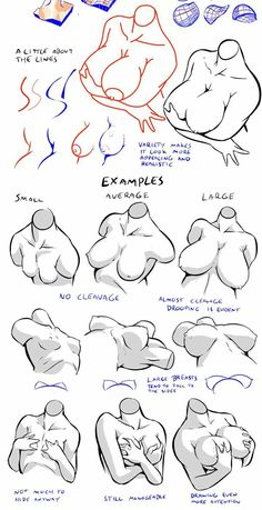 Breasts in various positions. Human Drawing, Body Drawing, Anatomy Drawing, Anatomy Art, Figure Drawing Reference, Anatomy Reference, Art Sketches, Art Drawings, Bd Art