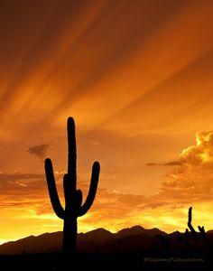 Tucson, Arizona, USA    Orange Rays (by Saguaro Pictures)