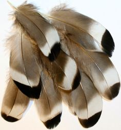 feathers For more fly fishing info follow and subscribe www.theflyreelguide.com Also check out the original pinners/creators site and support