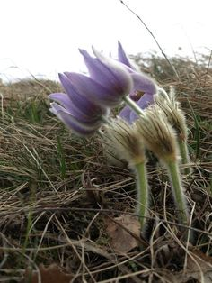 Wild Flowers, Bloom, Leaves, Plants, Planters, Plant, Wildflowers, Planting