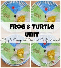 Frog and Turtle Preschool/ Kindergarten Unit Preschool Learning Activities, Animal Activities, Preschool Themes, Preschool Science, Toddler Preschool, Fun Learning, Turtle Life Cycle, Turtle Book, Kindergarten Units