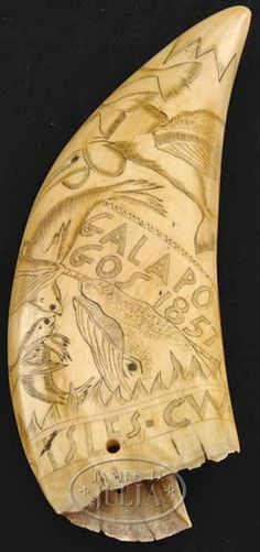 antiques price guide, antiques priceguide, nautical, America, A scrimshaw whale's tooth. Depicting swimming whales and seals. Inscribed Galapagos 1857. Also inscribed on base Falkland Isles. CW. Antique with later scrimshaw work.