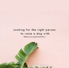 Looking for the right person to raise a down with. #empwoeringwomennow #dogmom #dog #goals #dogdad #dogfamily