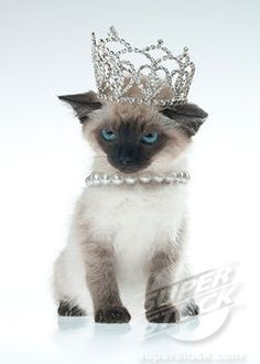 I am the Queen of the house via Cute as a Kitten ♥♥)
