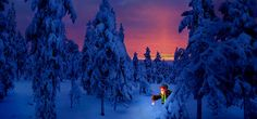 Elfs illuminates path to secret cottage Santa Claus Elfo iluminando camino secreto Papa Noel