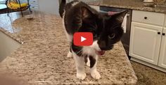 A cat with a voice with enough depth to rival the likes of Morgan Freeman and Barry White has become an Internet hero.