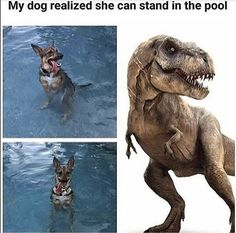23 Funny Animal Memes And Pictures Of The Day - Funny Dog Quotes - 23 Funny Animal Memes And Pictures Of The Day The post 23 Funny Animal Memes And Pictures Of The Day appeared first on Gag Dad. Animal Jokes, Funny Animal Memes, Funny Animal Pictures, Cute Funny Animals, Cute Baby Animals, Funny Cute, Animals And Pets, Funny Photos, Funniest Animals