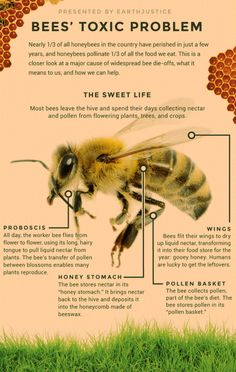may have figured out what's killing the bees. Are we brave enough to save them? We May Have Figured Out What's Killing The Bees. Are We Brave Enough To Save Them?We May Have Figured Out What's Killing The Bees. Are We Brave Enough To Save Them?