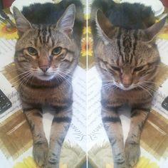 #buongiorno dal #gatto #colazione #breakfast #estate #summer #cat #goodmorning #weekend #finesettimana #sabato #amici #friends #stop