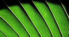 cosas verdes - Buscar con Google