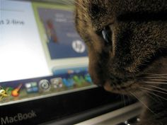 Apps for cats? Why not! Read about some quirky technology in this fun article