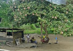 Life in Congo (Central Africa)