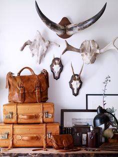 On the topic of adding richness to your home, we've gathered some more inspiration on how to add texture & dimension. From alligator heads to antlers, we love how taxidermy can be gorgeously layered into a space's decor. Interior Inspiration, Design Inspiration, Design Ideas, Antler Art, Interior Decorating, Interior Design, Decorating Houses, Interior Styling, My New Room