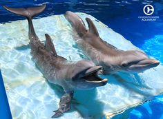 WE'RE CAPTIVE PERFORMING DOLPHIN SLAVES. PLEASE DON'T BUY A TICKET TO AQUAPRISON CRUELTY