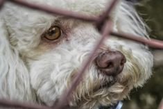 """Two dogs were found starving, and one was chained so tightly that he could have choked to death if rescuers hadn't arrived. The dogs were locked in a """"zombie house"""" without food or water. Sign this petition to demand justice for these poor dogs."""