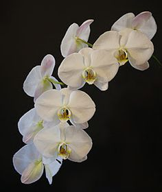 Orchid Wallpaper, Just Start, White Orchids, Gardening, Pretty, Floral, Flowers, Plants, Blog