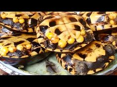 Asian Street Food | Delicious Khmer Fast Food Videos, Turtle, VILLAGE FO...