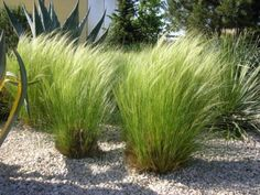 Création de jardin sec méditerranéen - adaptés à la sécheresse - Montpellier Castelnau-le-lez
