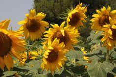 http://www.tokobungapedia.com/p/toko-bunga-di-wonosobo-karangan-bunga.html