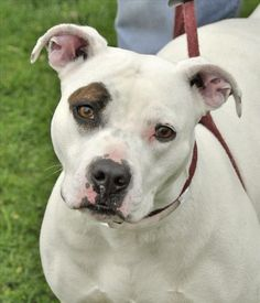 Franklin County Dog Shelter & Adoption Center