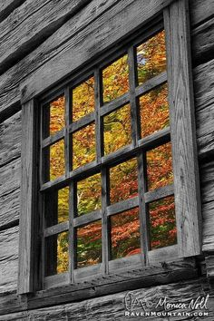 Photograph Past Reflections by Raven Mountain Images on Autumn Day, Autumn Leaves, Color Splash, Ventana Windows, Mountain Images, Seasons Of The Year, Window View, Through The Window, Great Smoky Mountains