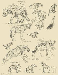 Spotted Hyena vs. Wolf Anatomy by Kenket | Kenket.devaintart.com