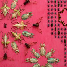 <p>If you are into creepy crawlers, this one is for you. Artist Jennifer Angus is known for creating large-scale artworks that incorporate real insects as the focal point. Angus has devoted much of he