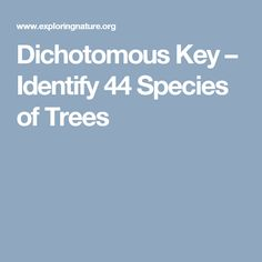The new periodic table song lyrics in order youtube teaching dichotomous key identify 44 species of trees urtaz Image collections