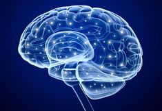 Learning a new route causes the brain to change its structure, a new study finds.