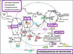 The Methyl Cycle