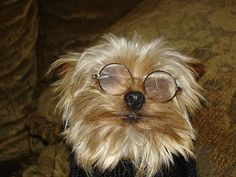 20 Photos of Dogs Wearing Glasses