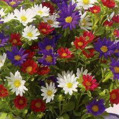 Nha Tu Mạnh Nhất Tren Thế Giới Nay được Xay Hoa Va Hoa đẹp