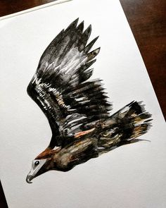 Lifting out some darks. Getting close. #eagle #baldeagle #juvenile #bird #process #wip #diy #art #artist #nature #wild #creature #watercolour #watercolor #paint #art #illustration #expression #mediation